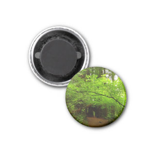 Maple Trees in Redwood Forest National Park 1 Inch Round Magnet