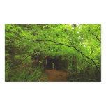 Maple Trees in Redwood Forest Rectangular Sticker