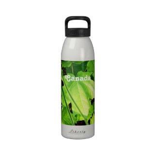 Maple Water Bottle