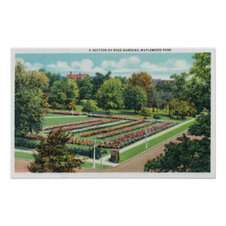 Maplewood Park Rose Garden View Posters