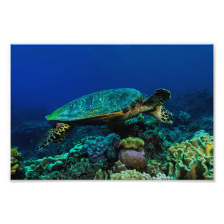 Mar de coral de la gran barrera de coral de la fotografías