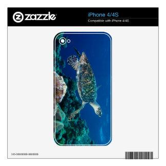 Mar de coral de la gran barrera de coral de la iPhone 4 calcomanía