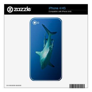 Mar de coral de la gran barrera de coral del iPhone 4 calcomanías