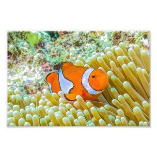 Mar de coral lindo de Clownfish la gran barrera de Fotografía
