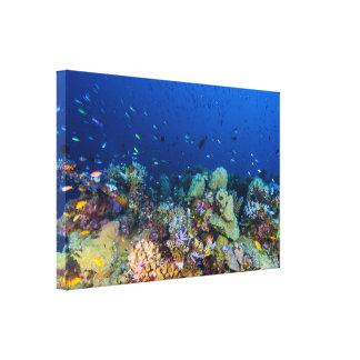 Mar de coral - pescados y filón tropicales - lona impresiones de lienzo