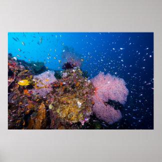 Mar de coral - pescados y filón tropicales - poster