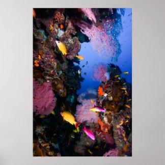 Mar de coral - pescados y filón tropicales - póster