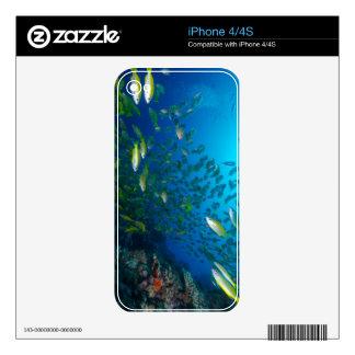 Mar de coral tropical de la gran barrera de coral calcomanías para el iPhone 4S