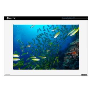 Mar de coral tropical de la gran barrera de coral portátil 38,1cm skins