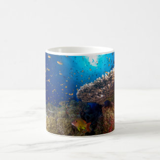 Mar de coral tropical de la gran barrera de coral taza de café