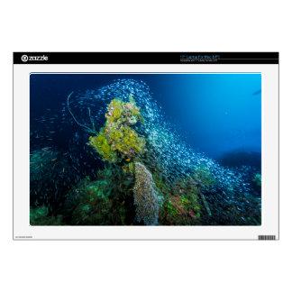 Mar de coral tropical de los pescados de la gran calcomanías para portátiles