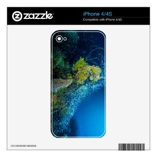 Mar de coral tropical de los pescados de la gran iPhone 4S calcomanía