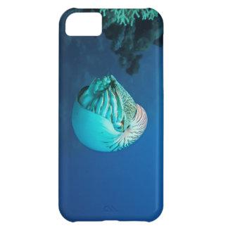 Mar de la gran barrera de coral Corsl del nautilus Funda Para iPhone 5C