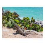 Mar de la iguana y de la turquesa fotografias
