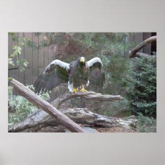 Mar Eagle que separa sus alas Póster