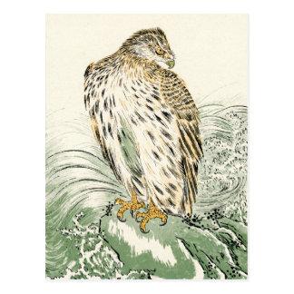 Mar japonés Eagle - Osprey