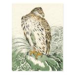 Mar japonés Eagle - Osprey Tarjetas Postales