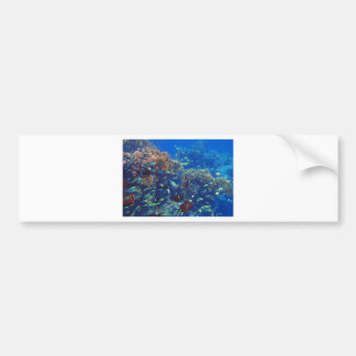 Mar Rojo asombroso Etiqueta De Parachoque