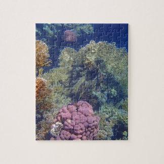 Mar Rojo colorido Puzzles