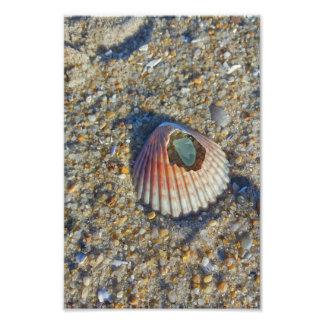 Mar Shell con el vidrio Fotografía