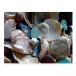 Mar Shell de cristal recogido Postal