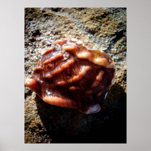 Mar Shell de Laguna en una roca Posters