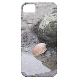 Mar Shell en el Driftwood Funda Para iPhone SE/5/5s