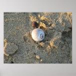 Mar Shell Impresiones