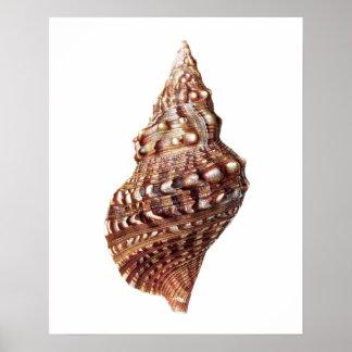 Mar Shell no 1 impresión del arte de la decoración Impresiones