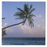 Mar y palmera azulejo cuadrado grande