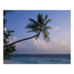 Mar y palmera impresiones