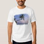 Mar y palmera playera