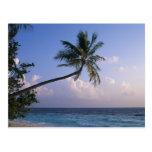 Mar y palmera postal