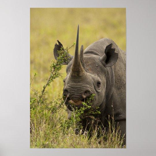 Mara Triangle, Masai Mara Game Reserve, Kenya, Poster