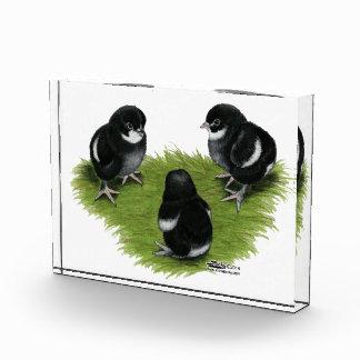 Marans Black Copper Chicks Award