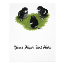 Marans Black Copper Chicks Flyer