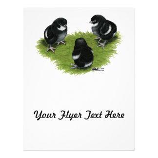 Marans Black Copper Chicks Flyers