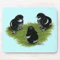 Marans Black Copper Chicks Mouse Pad