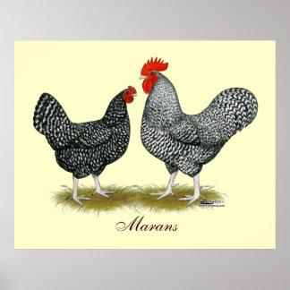 Marans:  Cuckoo Pair Posters