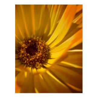 Maravilla amarilla el | Gelbe Ringelblume Tarjetas Postales