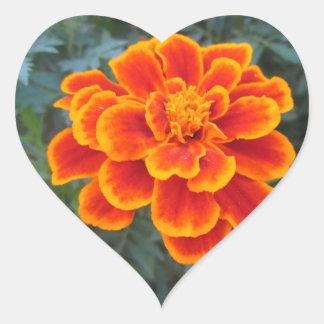 Maravilla anaranjada bonita pegatina en forma de corazón
