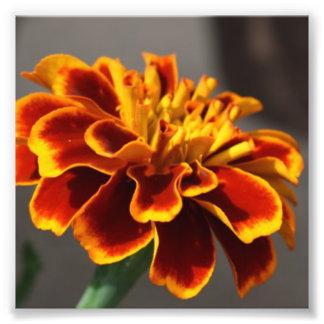 Maravilla anaranjada impresiones fotograficas
