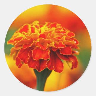 Maravilla anaranjada imponente pegatina redonda