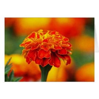 Maravilla anaranjada imponente tarjeta pequeña
