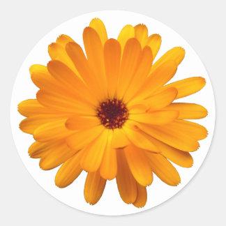 Maravilla anaranjada pegatina redonda