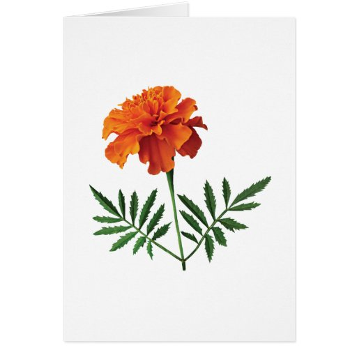 Maravilla anaranjada tarjetón
