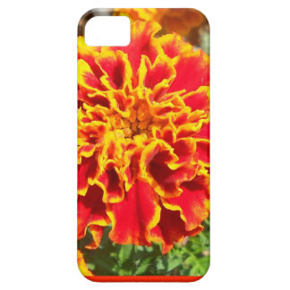 Maravilla anaranjada y amarilla iPhone 5 fundas
