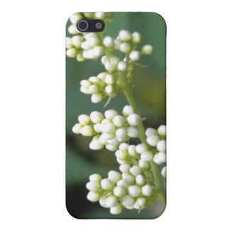 Maravilla blanca iPhone 5 coberturas