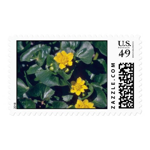 maravilla de pantano amarilla, (Caltha Palustris) Sello