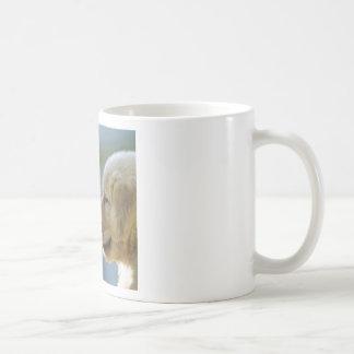 Maravilla pacífica tazas de café
